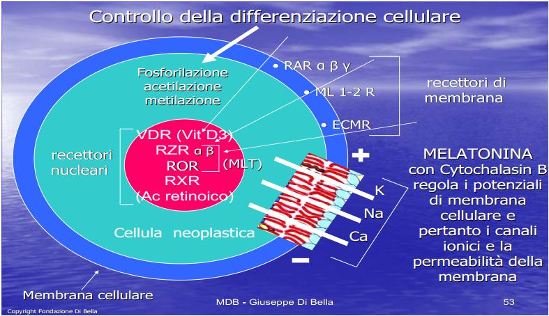 controllo-differ.-cellulare.jpg